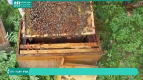 نحوه ی برداشت عسل و موم از کندوی زنبور عسل