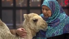 گریه بچه شتر در آغوش زن شهرستانی در صدا و سیما