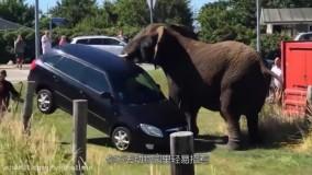 حمله حیوانات به انسان : جدید