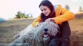 10 تا از نژاد سگها که کمتر می شناسیم