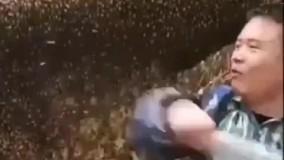 مرگ دردناک حیوان آزار به خاطر نیش زنبور