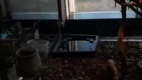 نگهداری از حیوانات در یک مرکز خرید غرب تهران