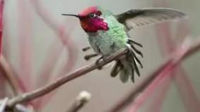 پرندهی ۸ میلیون دلاری ، با قابلیت تعویض ۶۲ رنگ