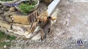 گربه ای که به شیوهای جالب موفق به شکار ببر شد