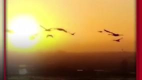 پرندگان مهاجر در بشقاب رستوران ها