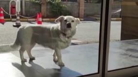 سگی که 6 روز بیرون بیمارستان منتظر صاحبش ماند