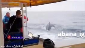 غافلگیری مسافران کشتی توسط نهنگ غولپیکر