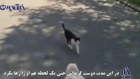 ویدویی حیرتانگیز از مراقبت ویژه یک گربه از سگی نابینا