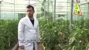 نقش ارتفاع بلند در تهویه گلخانه - شرکت کشاورزی زانکو