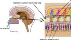 اختلال عصبی کلینیک گفتاردرمانی یاشا 09909501428