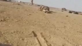 واژگونی خودروی پناهجویان افغان در مرز