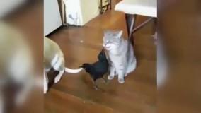 دوستی یک سگ و گربه با مهربون ترین کلاغ دنیا !