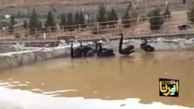کشتار پرندگان «باغ پرندگان قم» به دلیل آنفلوآنزا