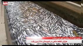 مرگ هزاران قطعه ماهی بر اثر زلزله سیسخت