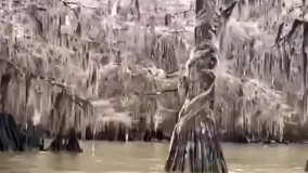 صحنه های آخر الزمانی از یک دریاچه در آمریکا