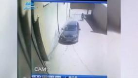 سگی که دزدها را غافلگیر کرد و مانع سرقت شد