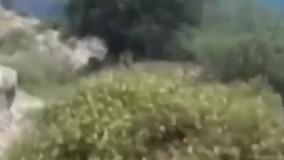 ویدئویی از اقدام وحشیانه مرد ترکیه ای