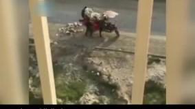 سرقت مخزن زباله با سهچرخه در روز روشن !