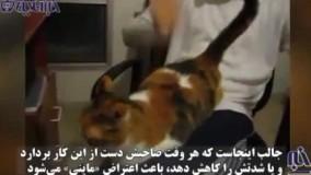 گربه ای با علایق بسیار عجیب که دنیا را شگفت زده کرده