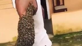 حمل یک کلونی از زنبور روی دست