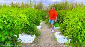 ناستیا و بابایی ؛ مزرعه سبزیجات ، ناستیا به دنبال سبزیجات جدید برای مامانی