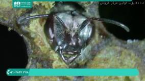 آشنایی با اجزاء تشکیل دهنده کلنی زنبور عسل