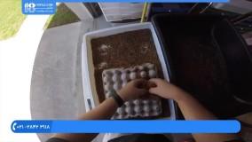 پرورش میل ورم ::: چگونگی جدا کردن سوسک های مرده از سوسک های زنده