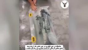 بسته بندی ماهی زنده در چین !