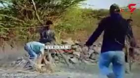 لحظه خطرناک رها کردن توله شیر از تله شکارچیان