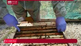 آموزش زنبورداری مدرن _ پرورش زنبور عسل