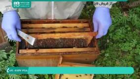 آموزش فراوری و استحصال محصولات زنبور عسل