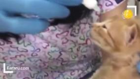 گربهای که بچهاش را برای درمان به بیمارستان برد