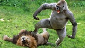 نبرد قدرتمندها از شیر و پلنگ تا فیل و اسب آبی