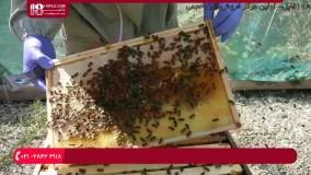 آموزش حرفه ای زنبورداری - بازرسی هفتگی برای یافتن حشره ی موم خوار