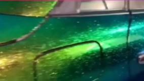 رنگ خاص یک خودرو !