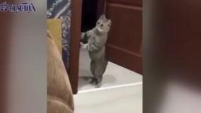 واکنش جالب و خندهدار یک گربه به دعوای یک زن و شوهر
