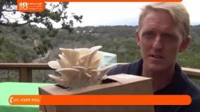 آموزش تولید و پرورش قارچ | پرورش قارچ در محفظه