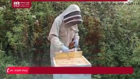 آموزش زنبورداری - ملکه ی جدید کندو قسمت 9