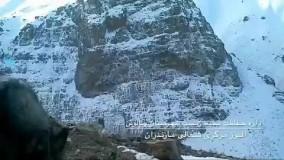کلیپی زیبا از آنتن زیستی در منطقه البرز مرکزی