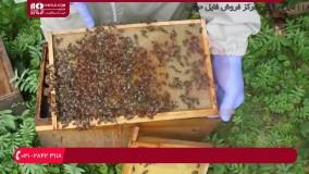 آموزش زنبورداری | محصور کردن ملکه