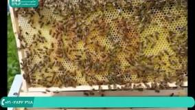آموزش زنبورداری | آپدیت دسته با تکان دادن