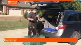 آموزش تربیت سگ   تشخیص مشکلات رفتاری و فیزیکی در سگ ها