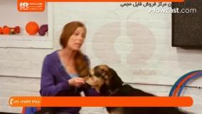 آموزش تربیت سگ   آموزش دست دادن به سگ