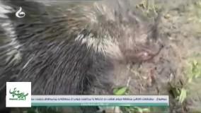 حمله چوب برها به خبرنگاران در «والیسرای شفت»