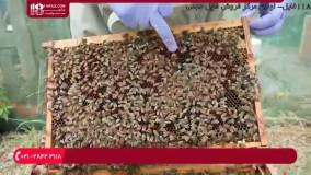 آموزش زنبورداری - روش بررسی سوپر برای عسل آماده