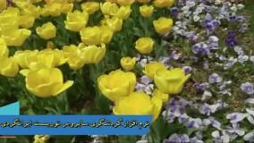 گلهای بهاری طبیعت گردی آهنگ راغب دیوانگی نرم افزار گردشگری سایروس توریست