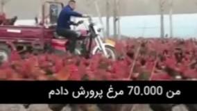 مردی با هفتاد هزار مرغ و خروس !