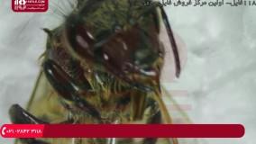 آموزش زنبورداری (دوبله) - میکروسکوپی  - تشریح انگل نایی