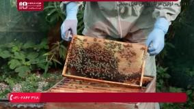 آموزش زنبورداری - آپدیت چهارم ویروس مزمن فلج زنبور