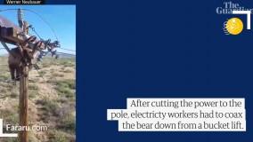 گیر کردن خرس روی تیر برق !